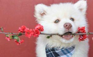 собачка с цветком в зубах. фото