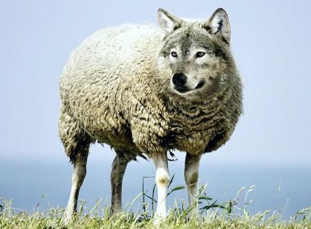 волк в овечьей шкуре. иллюстрация