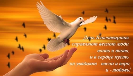 белый голубь. фото
