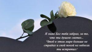белая роза. фото