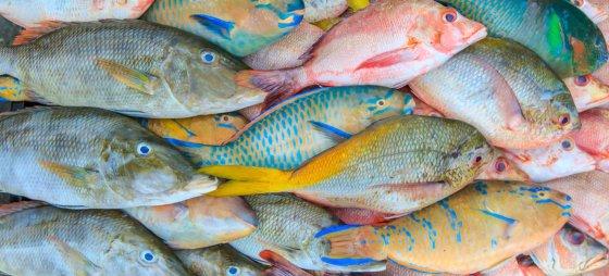 множество рыб. фото