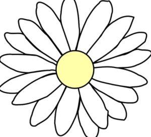 ромашка. иллюстрация