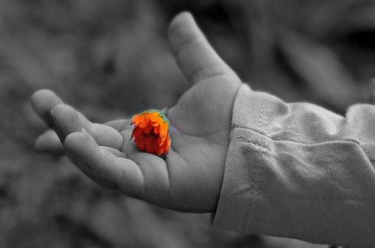 протянутая детская ручка с цветком. фото