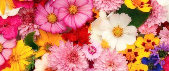 фон из множества цветов. иллюстрация