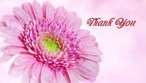 открытка с розовой герберой и надписью. иллюстрация