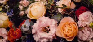 скопление разноцветных цветов. фото