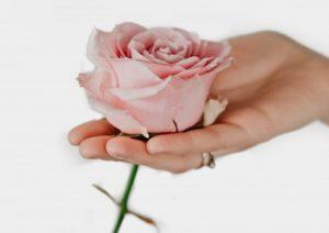 Розовая роза в руке. фото
