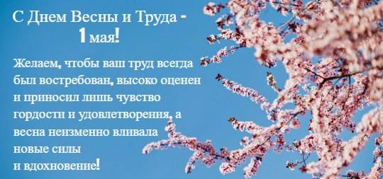 Цветущие ветки вишни и текст. иллюстрация
