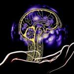 Силуэт головного мозка в человеческой ладони. иллюстрация