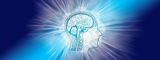 Контуры головы с силуэтом головного мозга. иллюстрация