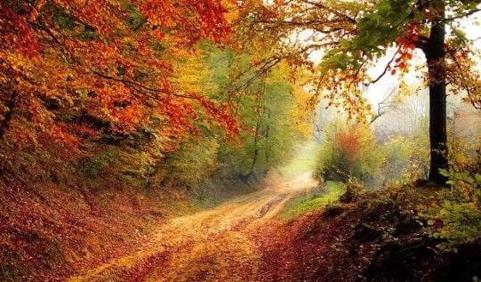 лесная дорога. фото