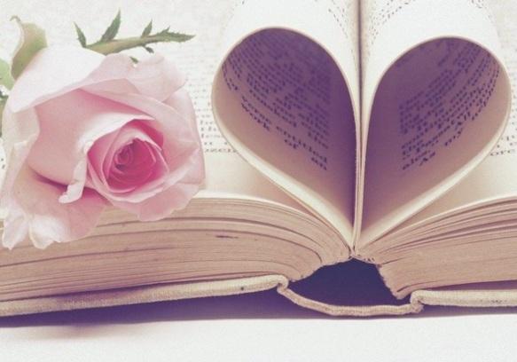 Розовая роза на книге. фото