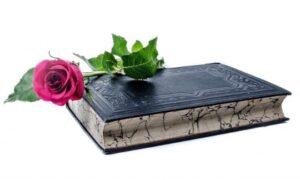 Красная роза лежит на книге. фото
