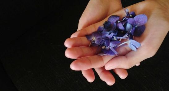Цветки фиалки трехцветной. иллюстрация